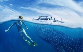 Картинка Whale Shark, snorkeling, young lady