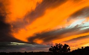 Картинка небо, облака, деревья, вечер, зарево