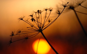 Обои солнце, ветка, растение