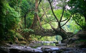 Картинка лес, деревья, река, камни, Индия, лианы, East Khasi Hills, Мегхалая, живой мост