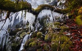 Картинка лед, зима, дерево, водопад