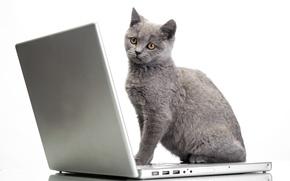 Картинка кот, ноутбук, Glance, Cats, Laptops