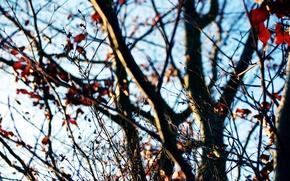 Обои осень, небо, ветки, дерево, солнечный день, последние листья