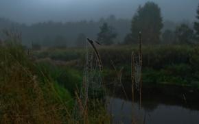 Картинка капли, река, утро, Паутина