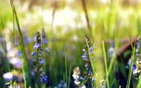 Картинка зелень, поле, трава, цветы, земля, растения, луг