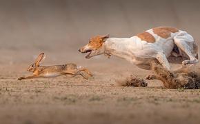 Обои собака, Death Race, заяц