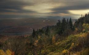 Картинка грусть, лес, Осень