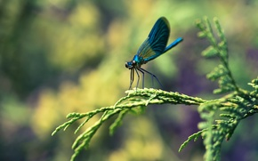 Картинка макро, ветка, стрекоза, насекомое