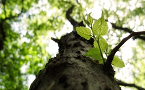Картинка листья, макро, ветки, природа, дерево