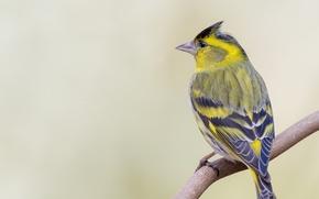 Картинка bird, back, branch