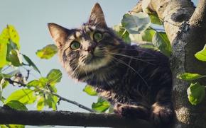 Обои дерево, взгляд, кошак, глаза, кот