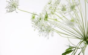 Обои цветы, макросъёмка
