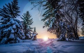 Обои зима, снег, деревья, ели, солнце, закат