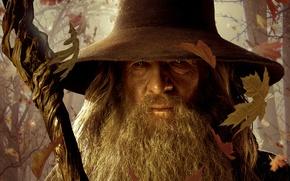 Обои мудрый волшебник, Хоббит Нежданное путешествие, Gandalf, The Lord of the Rings, опавшие листья, The Hobbit ...