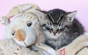 Картинка игрушка, сон, котёнок