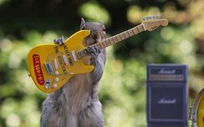 Картинка гитара, белка, концерт, Sex Squirrels