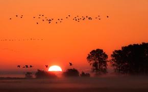 Обои туман, птицы, закат