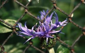 Картинка цветок, сиреневый, Проволока