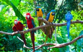 Картинка зелень, птицы, ветки, попугаи