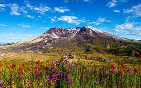 Обои цветы, гора, Вашингтон, Mount St. Helens, солнце, небо, трава, облака, США