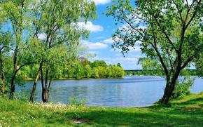 Картинка зелень, лето, трава, деревья, озеро, одуванчики