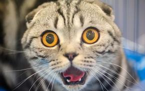 Картинка кошка, кот, морда, испуг, ужас, глазища