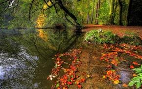 Картинка осень, лес, вода, деревья, природа, растения, forest, trees, nature, water, autumn, leaves, rivers