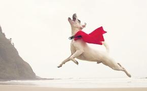 Обои собака, волны, полет, скалы, пляж, прыжок