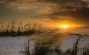 Картинка зима, пляж, солнце, закат, ветер, растения, Флорида, дюны
