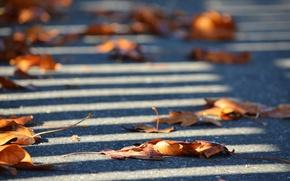 Картинка autumn, leaves, street, fence, shadows, sunlight