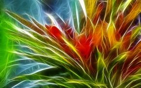 Картинка цветок, листья, природа, растение