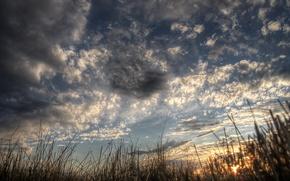 Обои восход, небо, ночь, лес, болото