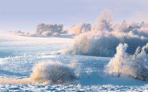 Картинка зима, снег, деревья, холмы, кусты