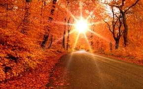Обои солнце, лучи, Осень, дорога, деревья, лес, листья
