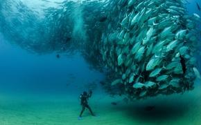 Картинка рыбы, стая, аквалангист, под водой, косяк