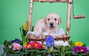 Обои цветы, животное, собака, колодец, щенок