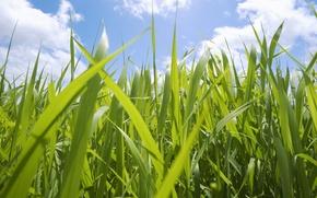 Обои макро, небо, трава