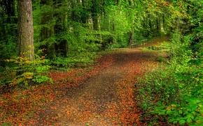 Картинка дорога, лес, листья, деревья, мостик