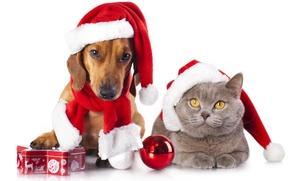 Обои собака, кот, колпаки, шарф, коробочка