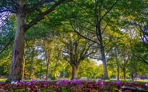 Картинка цветы, парк, London, деревья, Лондон, Англия, England