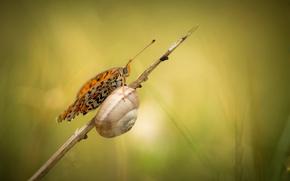 Картинка бабочка, улитка, тростинка