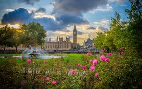 Обои цветы, парк, Англия, Лондон, розы, Биг-Бен, фонтан, кусты, Вестминстерский дворец, London, England, Big Ben, Palace ...