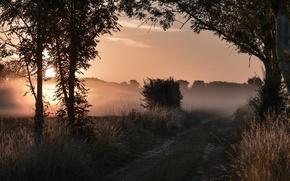 Обои туман, дорога, вечер