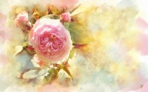 Картинка цветок, роза, акварель, бутоны