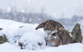 Картинка зима, снег, кролик