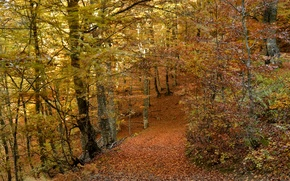 Картинка дорога, осень, лес, листья, деревья