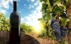 Обои небо, листья, солнце, облака, ягоды, стол, вино, чёрный, бутылка, виноград, гроздь, виноградник, black, sky, clouds, ...