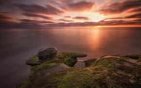 Картинка море, пляж, водоросли, камни, рассвет, утро