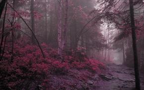 Обои дорога, лес, фиолетовый