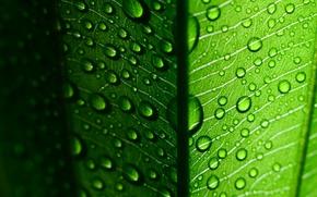 Картинка широкоэкранные, листочек, HD wallpapers, обои, листик, листья, green macro, вода, полноэкранные, green, background, fullscreen, капли, ...